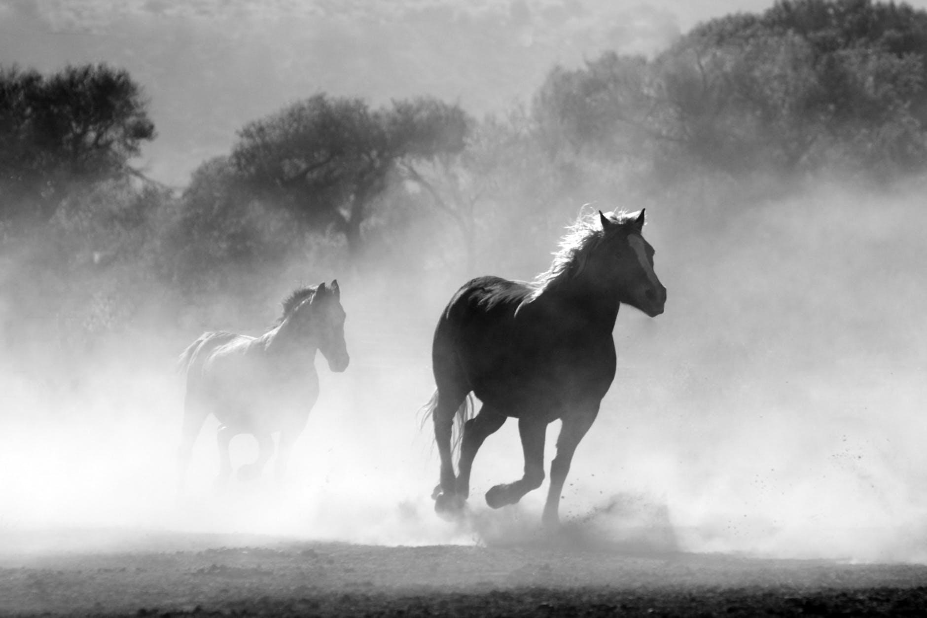 czarno biały obraz przedstawiający konia